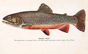 brook trout 1918